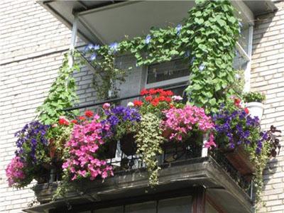 1373053813_balkonnye-rasteniya